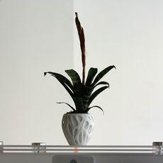 Flower Pot Organic
