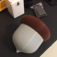 Picture of print of Large Acorntainers / Musical Shaker