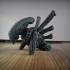 Alien - Xenomorph image