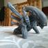 Alien - Xenomorph print image