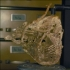 Mummified oppossum image