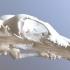 Bear Skull image