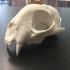 Bobcat Skull print image