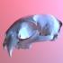 Bobcat Skull image
