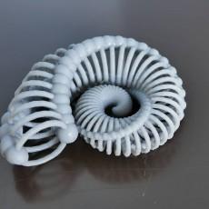 Picture of print of Bone Nautilus