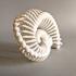 Bone Nautilus image