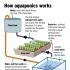 Modular Aquaponics Setup image