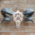 Wired Ram Skull print image
