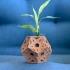 Rustic Star Vase image