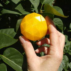Picture of print of Citrus Box
