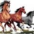 Horses  Drink Coaster image