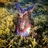 Skyscale Dragon | Guild Wars 2 image