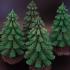 Pine Tree image