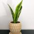 Plant Pot w/ saucer image