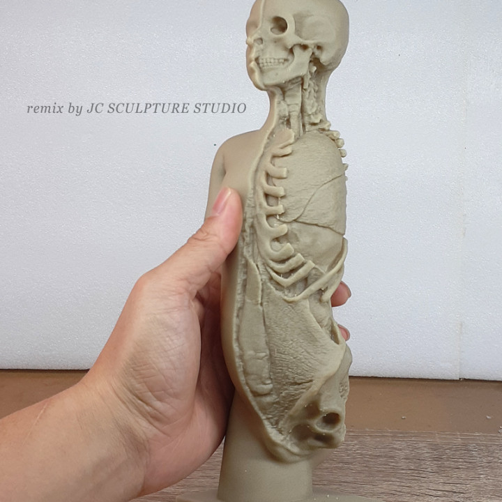 RESIN READY - Plaster model of torso and head, showing partial dissection
