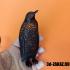 Penguin, design Voronoi image