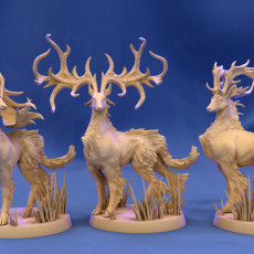Stag, Majestic pose (3 antler variations)