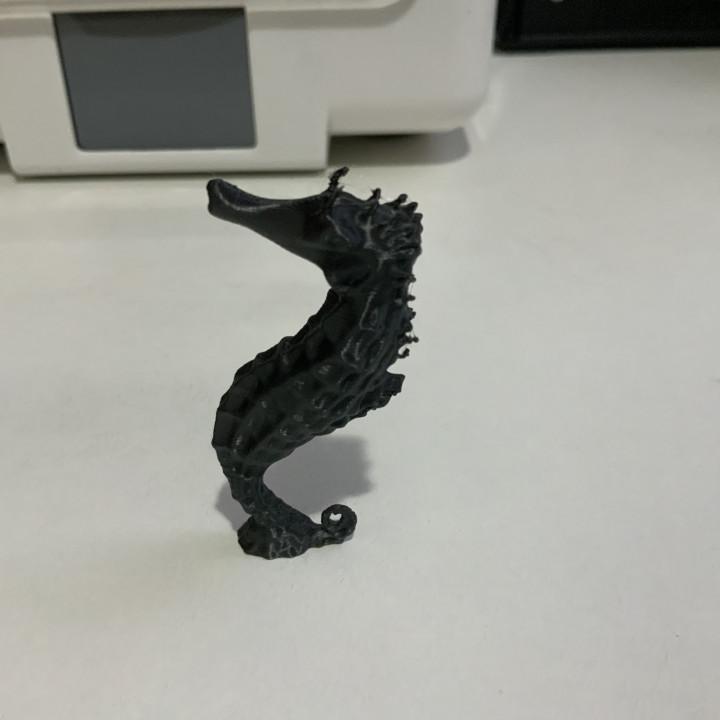 Seahorse on The Stone