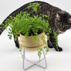 Iso-Pot Indoor Planter and Stand