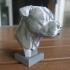 Pit Bull image