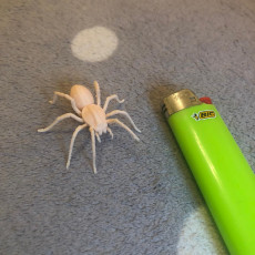 Picture of print of Free Giant Spider