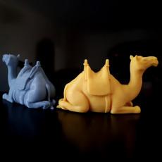 Camel Sitting With Saddle V2