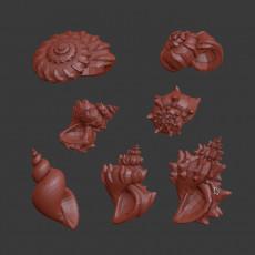Spiral Shells