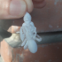 Dwarf Spider Victim with Spider image