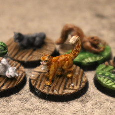 Picture of print of House Cats - Presupported - 5 Poses
