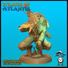 Wise Sea Turtle Pirate