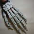 Skeleton skin for my Articulated finger extensions image