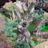Swamp Dead Tree image