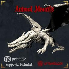 Animal Mounts