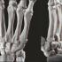 Bone Hand Free STL image