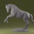 Achal Horse image